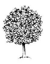 Ball Tree Logo
